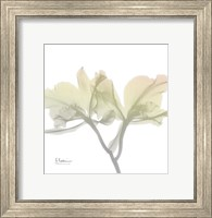 Sunday Morning Orchid Fine-Art Print