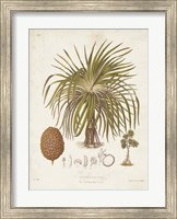 Antique Tropical Palm II Fine-Art Print