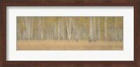 Aspens Panorama Fine-Art Print