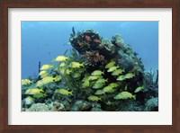 Reefscape with school of striped grunts Fine-Art Print