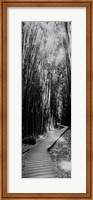Trail in a bamboo forest, Hana Coast, Maui, Hawaii Fine-Art Print