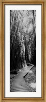 Trail in a bamboo forest, Hana Coast, Maui, Hawaii Fine-Art Print