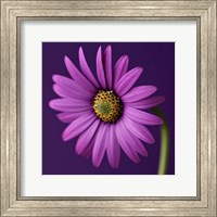 Purple Beauty Fine-Art Print