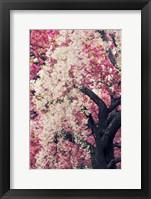 Asian Cherry Fine-Art Print