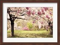 Cherry Hill Morning Fine-Art Print