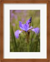 Iris Art Fine-Art Print