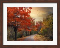 Autumn Maples Fine-Art Print