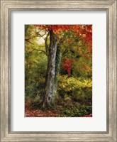 Autumn Ablaze Fine-Art Print