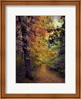 Autumn Trail Fine-Art Print