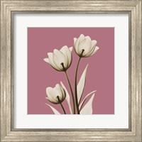 Pink Luster Tulips Fine-Art Print