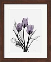 Three Purple Tulips H14 Fine-Art Print