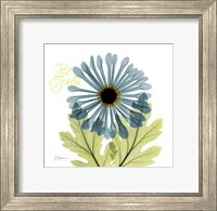 Greatful Chrysanthemum H68 Fine-Art Print