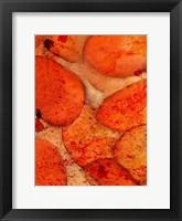 Orange Day A Fine-Art Print