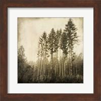 Enchanted Forest 3 Fine-Art Print