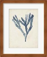 Seaweed Specimens I Fine-Art Print