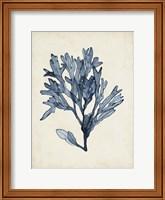 Seaweed Specimens II Fine-Art Print