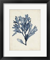 Seaweed Specimens II Fine-Art Print