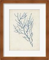 Seaweed Specimens III Fine-Art Print