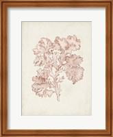 Seaweed Specimens VI Fine-Art Print