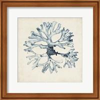 Seaweed Specimens X Fine-Art Print
