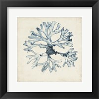Seaweed Specimens X Fine-Art Print