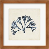 Seaweed Specimens XI Fine-Art Print