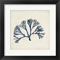 Seaweed Specimens XI Fine-Art Print