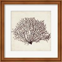 Seaweed Specimens XII Fine-Art Print