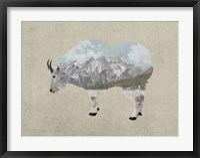 Rocky Mountain Goat Fine-Art Print