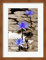 Pop of Color Lotus Flowers Fine-Art Print