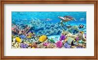 Sea Turtle and fish, Maldivian Coral Reef Fine-Art Print