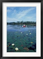 Fragrant Water Lily, Kayaking on Umbagog Lake, Northern Forest, New Hampshire Fine-Art Print