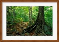 White Blaze Marks Appalachian Trail, White Mountains, New Hampshire Fine-Art Print