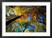 Northern Hardwood Forest, New Hampshire Fine-Art Print