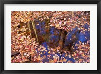 Fall Leaves and Reflections, Nature Conservancy Land Along Crommett Creek, New Hampshire Fine-Art Print