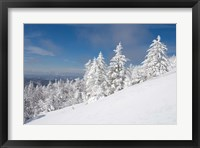 Snowy Trees on the Slopes of Mount Cardigan, Canaan, New Hampshire Fine-Art Print