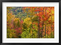 Forest in Grafton, New Hampshire Fine-Art Print