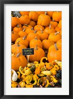 Gourds, Meredith, New Hampshire Fine-Art Print