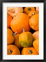 Pumpkins at the Moulton Farm, Meredith, New Hampshire Fine-Art Print