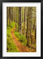 A trail around Ammonoosuc Lake, White Mountain National Forest, New Hampshire Fine-Art Print