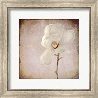 Paper Magnolia Fine-Art Print