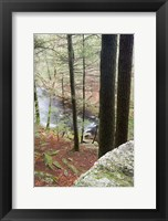 Forest of Eastern Hemlock Trees in East Haddam, Connecticut Fine-Art Print
