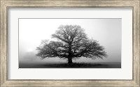Tree In The Mist Fine-Art Print