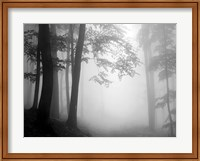 Woods 1 Fine-Art Print