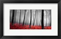 Autumn Woods 2 Fine-Art Print