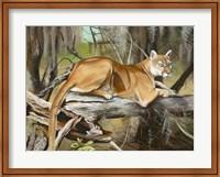 Florida Panther Fine-Art Print