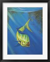Mahi Mahi Fine-Art Print