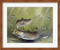 Speckled Trout Fine-Art Print