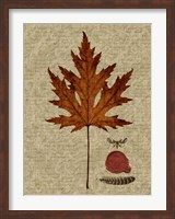 Autumn Leaf I Fine-Art Print