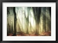 Dissolving Woods Fine-Art Print